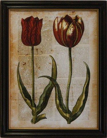 Antiquarian Tulip IV