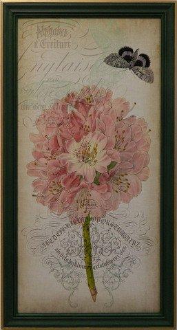 Cartouche & Floral II