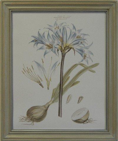 Bashful Blue Floral II