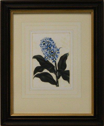Vintage English Botanical Study Blue II