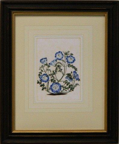 Vintage English Botanical Study Blue III