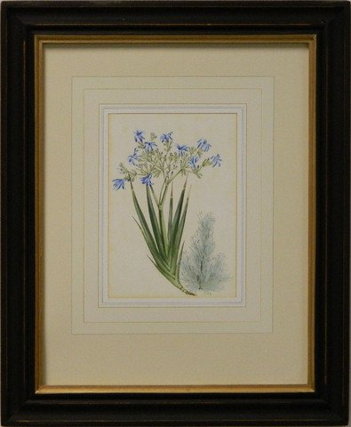 Vintage English Botanical Study Blue IV