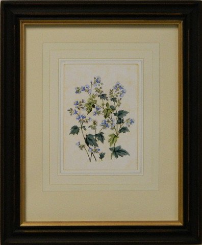 Vintage English Botanical Study Blue V