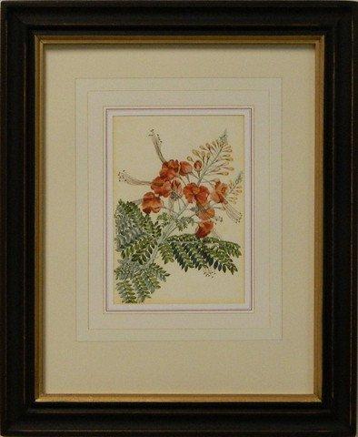 Vintage English Botanical Study Red III