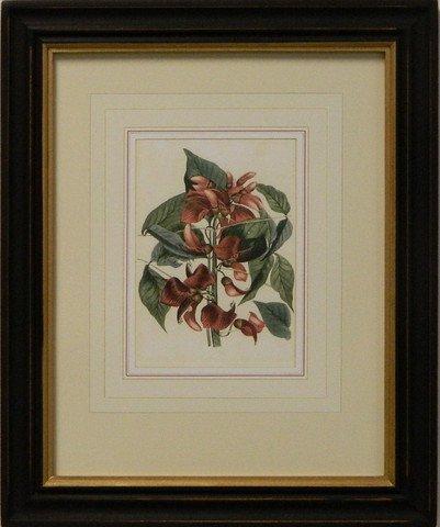 Vintage English Botanical Study Red I