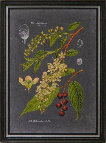 Midnight Botanica II