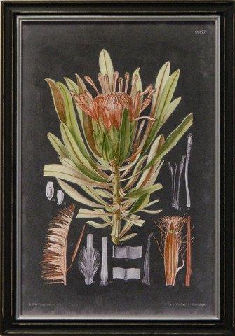 Vintage Slate Botanical II