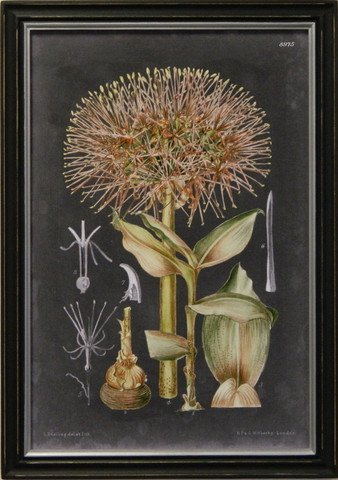 Vintage Slate Botanical IV