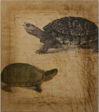 Tandem Tortoise II