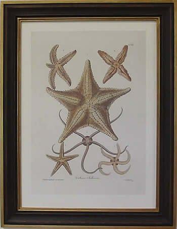 Starfish I Teak Frame