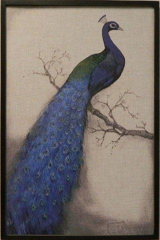 Blue Peacock I