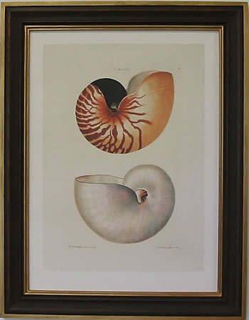 Nautilus I Teak Frame
