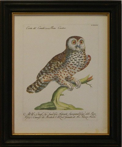 Manetti Owl I