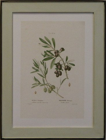 European Olives I