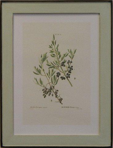 European Olives IV
