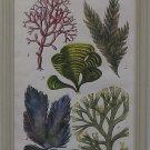 Seaweed Plate A