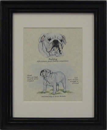 Bulldog White-Stack