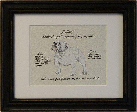 Bulldog, White