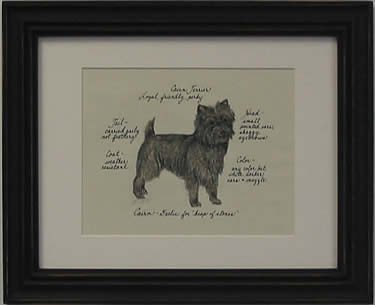 Cairn Terrier, Brindle