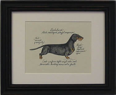 Dachshund Wire Hair, Black & Tan