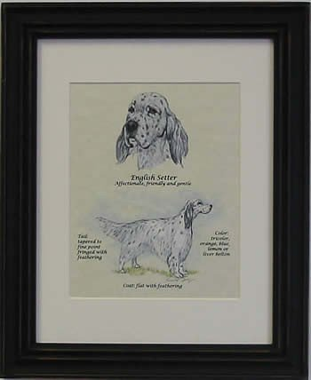 English Setter Blue-Stack