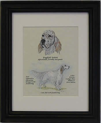 English Setter Orange -Stack