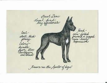 Great Dane, Black Cropped Ears