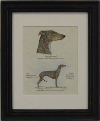 Greyhound Brindle-Stack