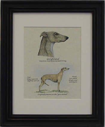 Greyhound Fawn-Stack