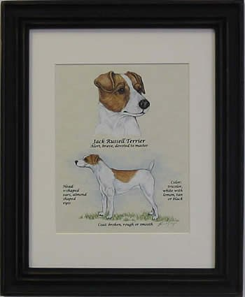 Jack Russell Smooth Brown & White-Stack