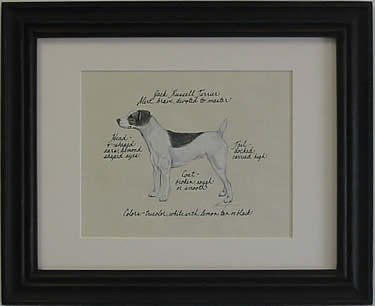 Jack Russell Smooth, Blk & Wht