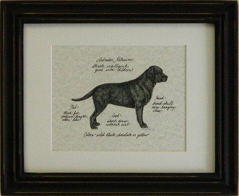 Labrador Retriever, Black