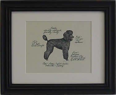 Poodle, Black Puppy Cut
