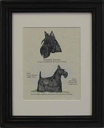 Scottish Terrier-Stack