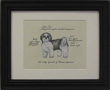 Shih Tzu Grey Puppy Cut