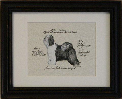 Tibetan Terrier, Black & White