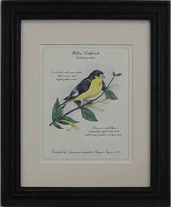 Willow Gold Finch