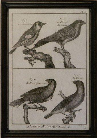 Historie Naturelle Orinthologie I