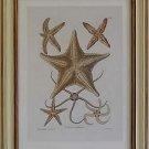 Starfish I Pecan Frame