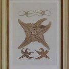 Starfish II Pecan Frame