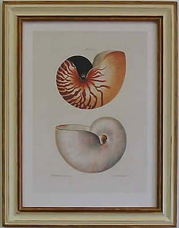 Nautilus I Pecan Frame