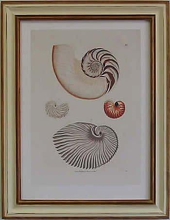 Nautilus II Pecan Frame