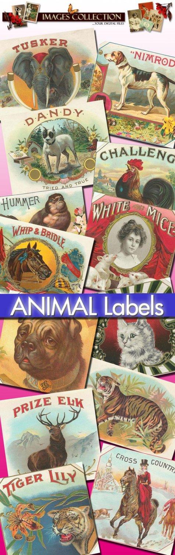 214 Animals: rabbit bunny dog cats horses mammals pets birds