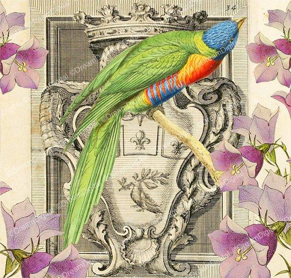 Colorful Bird Printable Image, Digital Background, Vintage Illustration