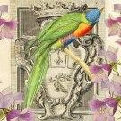 Colorful Bird Printable Image, Digital Background, Vintage Illustration