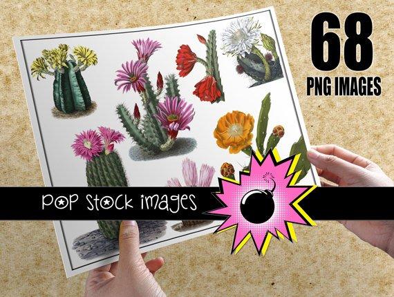 Desert Cactus Digital Image Collection