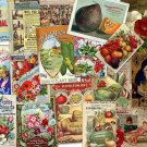 DVD Old Flowers Fruit Seed Feed ADVERTISING CATALOG Images eBooks Photos Illus