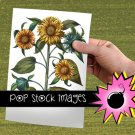 VINTAGE BOTANICAL SUNFLOWER Digital Graphic - Large Digital Image of
