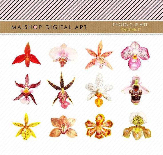 Orchids Clip Art - Flowers Clipart- Digital Collage Sheet - Orchids