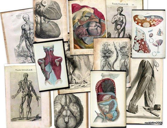 Hi Res Art DVD: Old 1500s Human BODY ANATOMY Organs Medicine Illustration Sketch